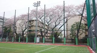 2015sakura040502.pic
