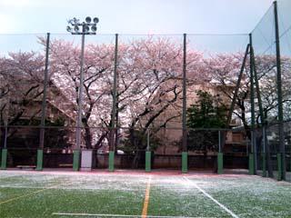 2010sakura_over