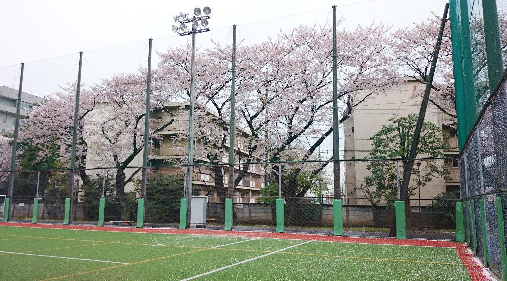 201504sakura03
