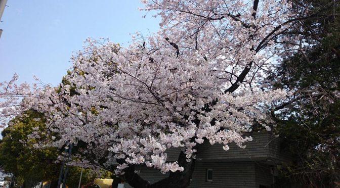桜コレクション2019